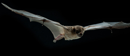 Slow motion image of bat